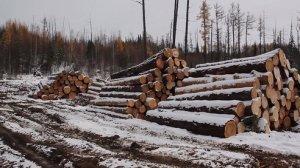 Russian Wood 2